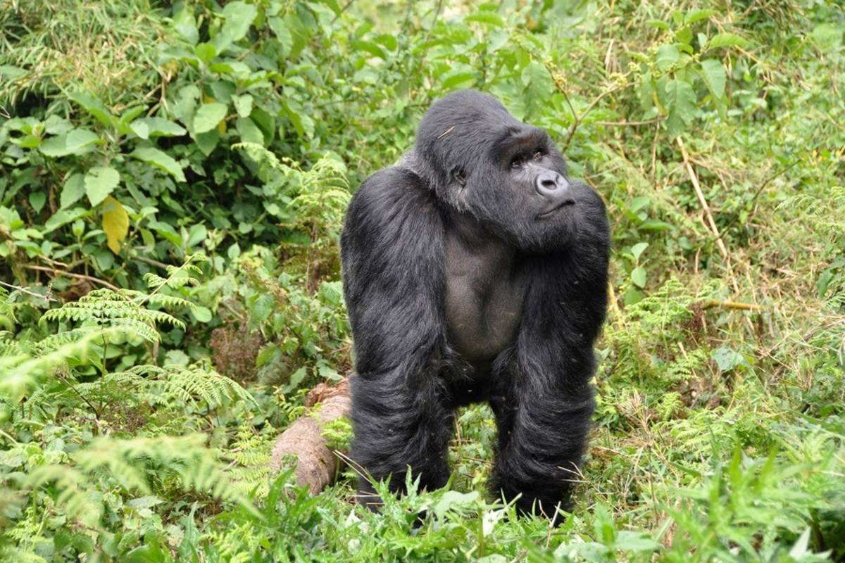 Primates of Rwanda