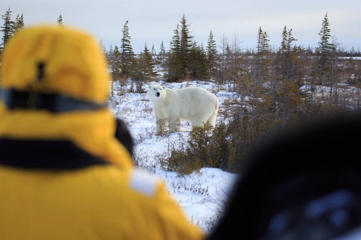 Great Ice Bear Adventure: Dymond Lake Eco-Lodge