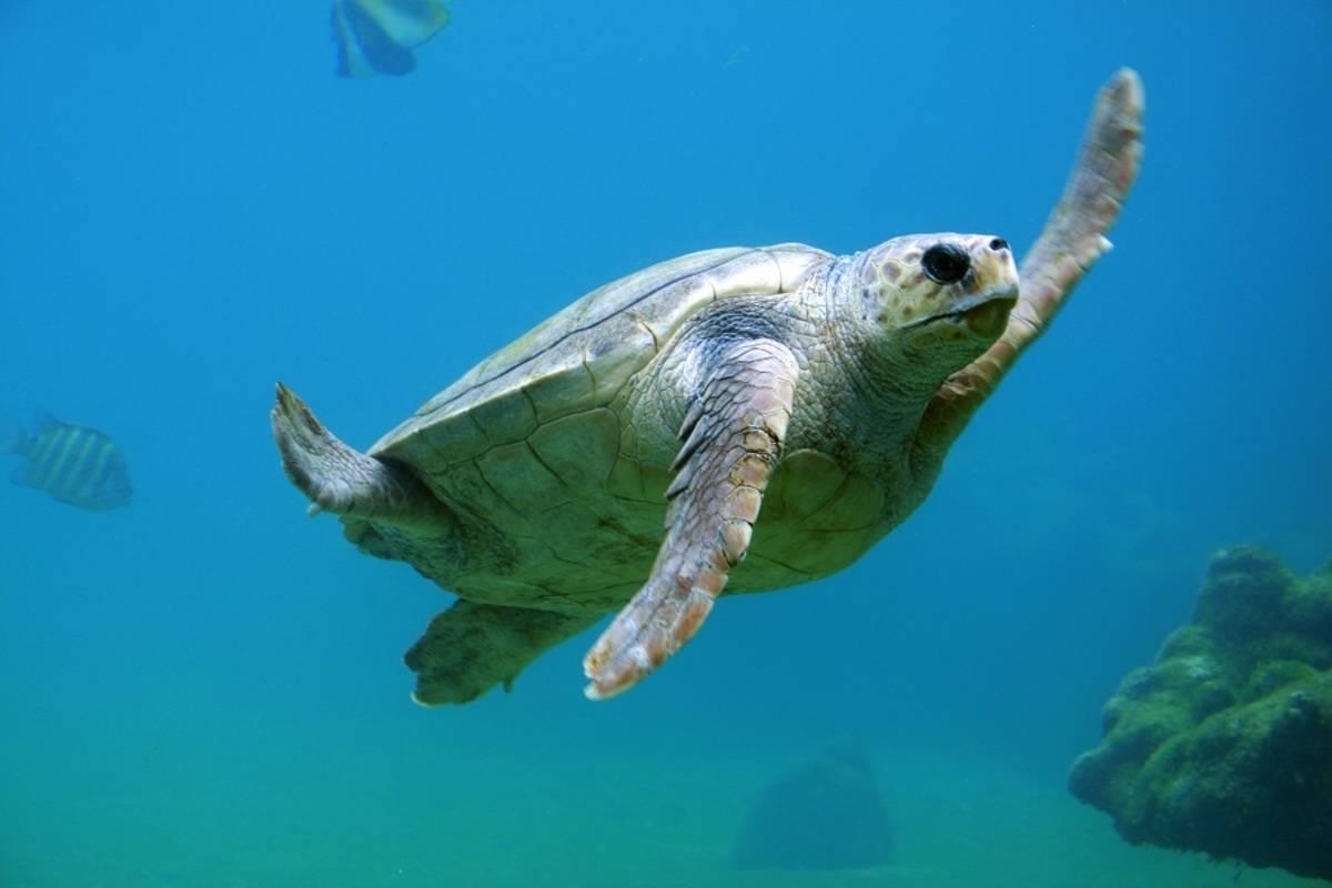 Galapagos Express Diving