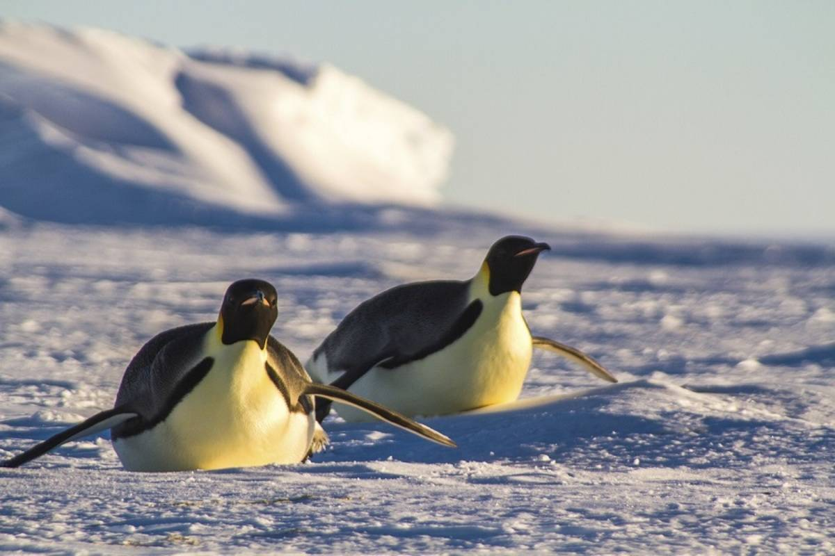 Emperor Penguin Land Based Camping Safari