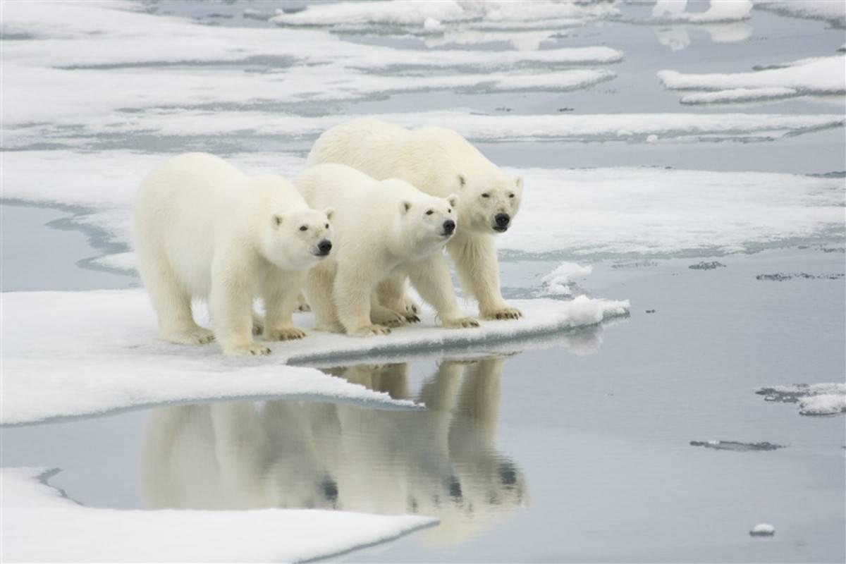 Spitsbergen - Northeast Greenland, Aurora Borealis