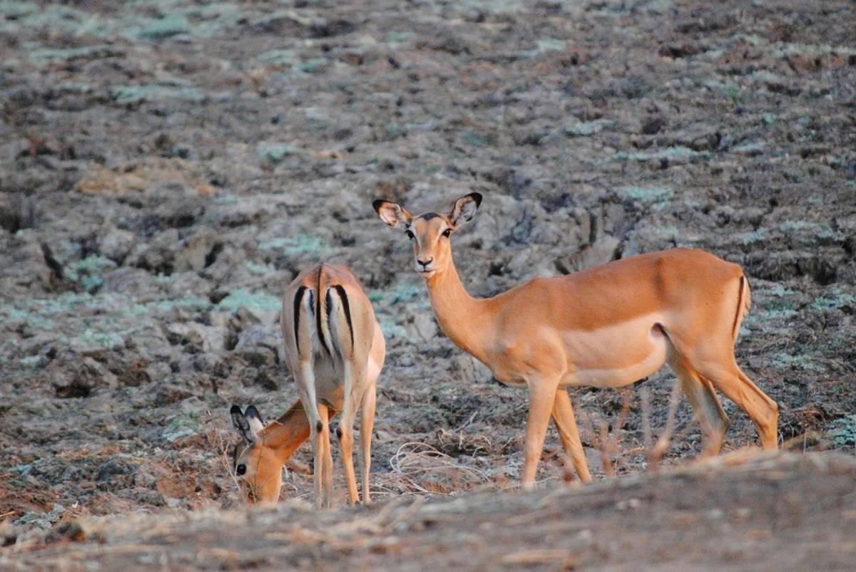 Wild Africa Safari