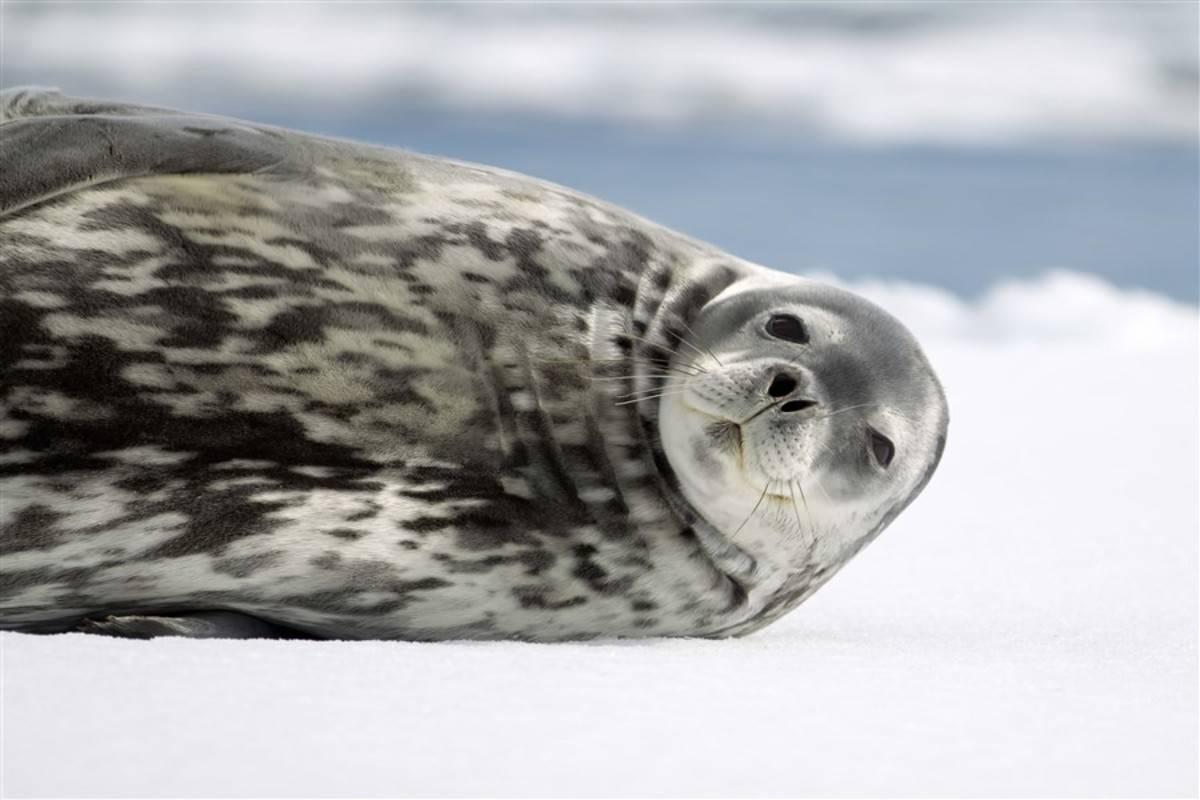 Emblematic Antarctica ex. Ushuaia