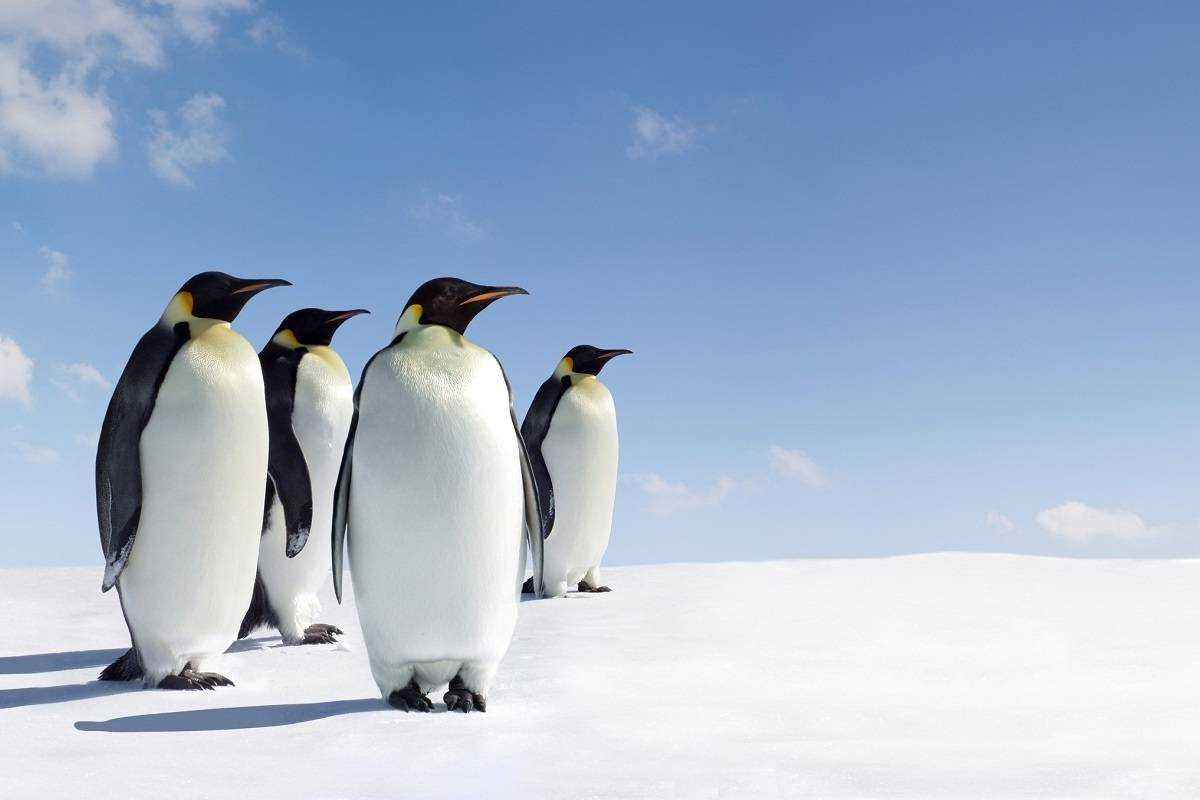 Antarctic Explorer - Discovering the 7th Continent