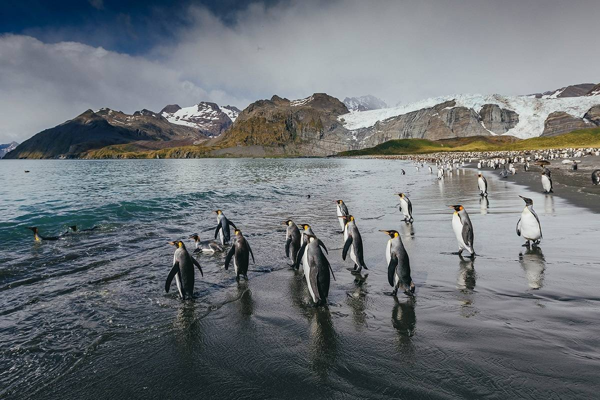 Celebrating Shackleton - Journey from Antarctica to South Georgia