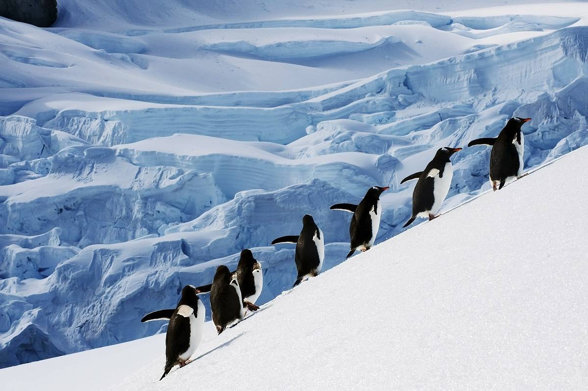 Antarctica - Elephant Island & Falkland Islands