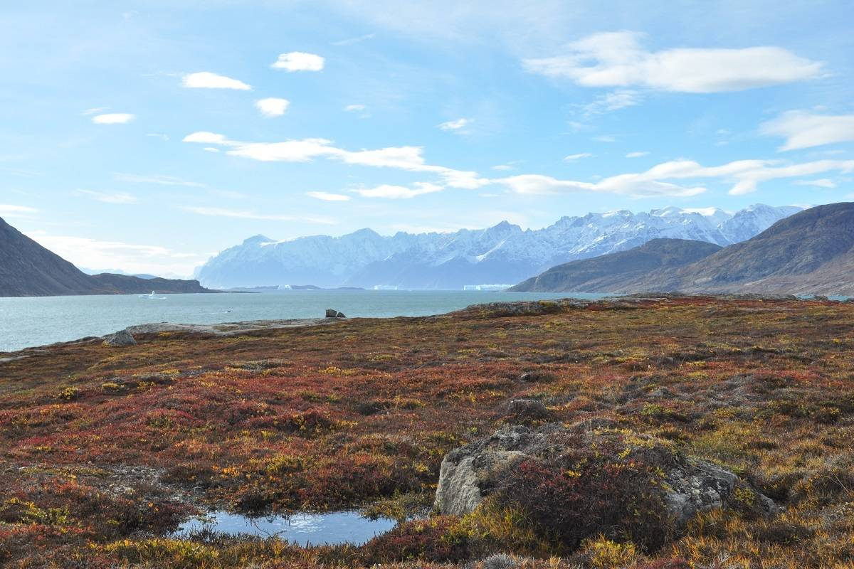 North Spitsbergen - Summer Solstice, In Search of Polar Bear & Pack Ice