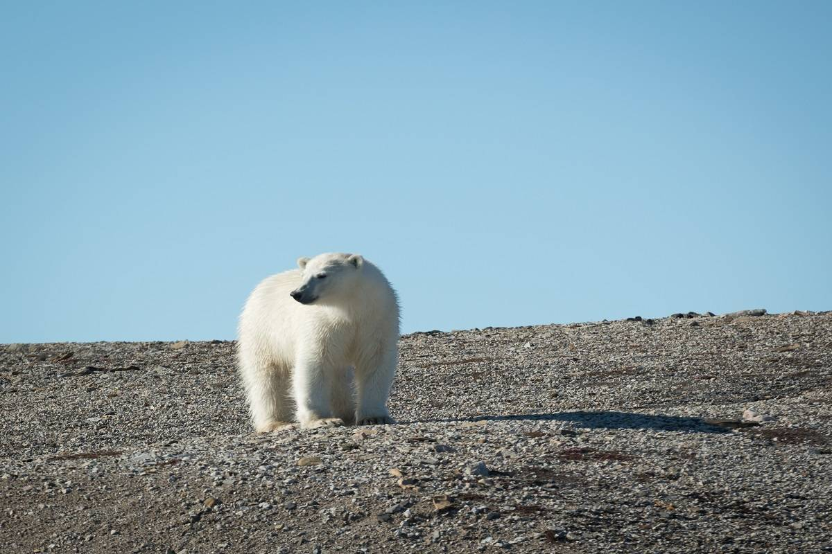 Spitsbergen Explorer - Wildlife Capital of the Arctic