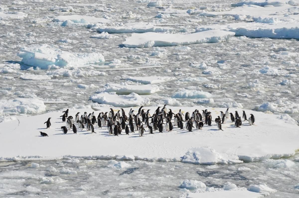 New Years in Antarctica