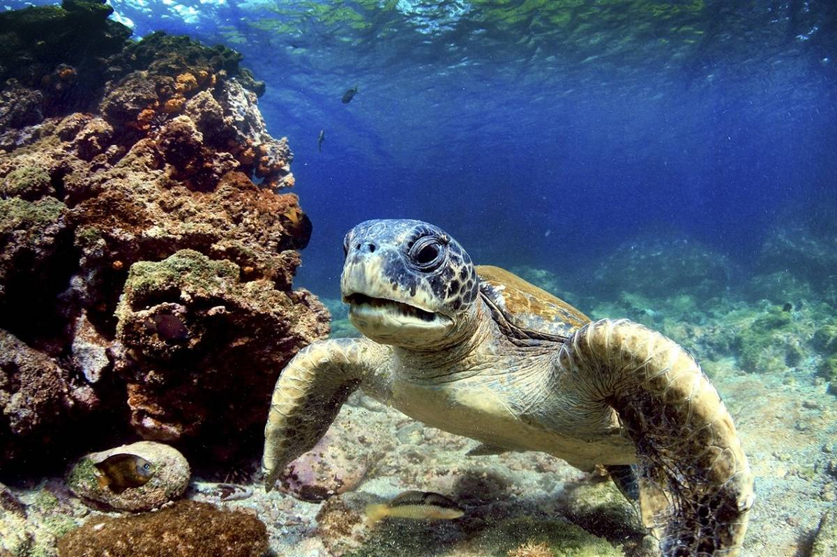 Baja California Odyssey