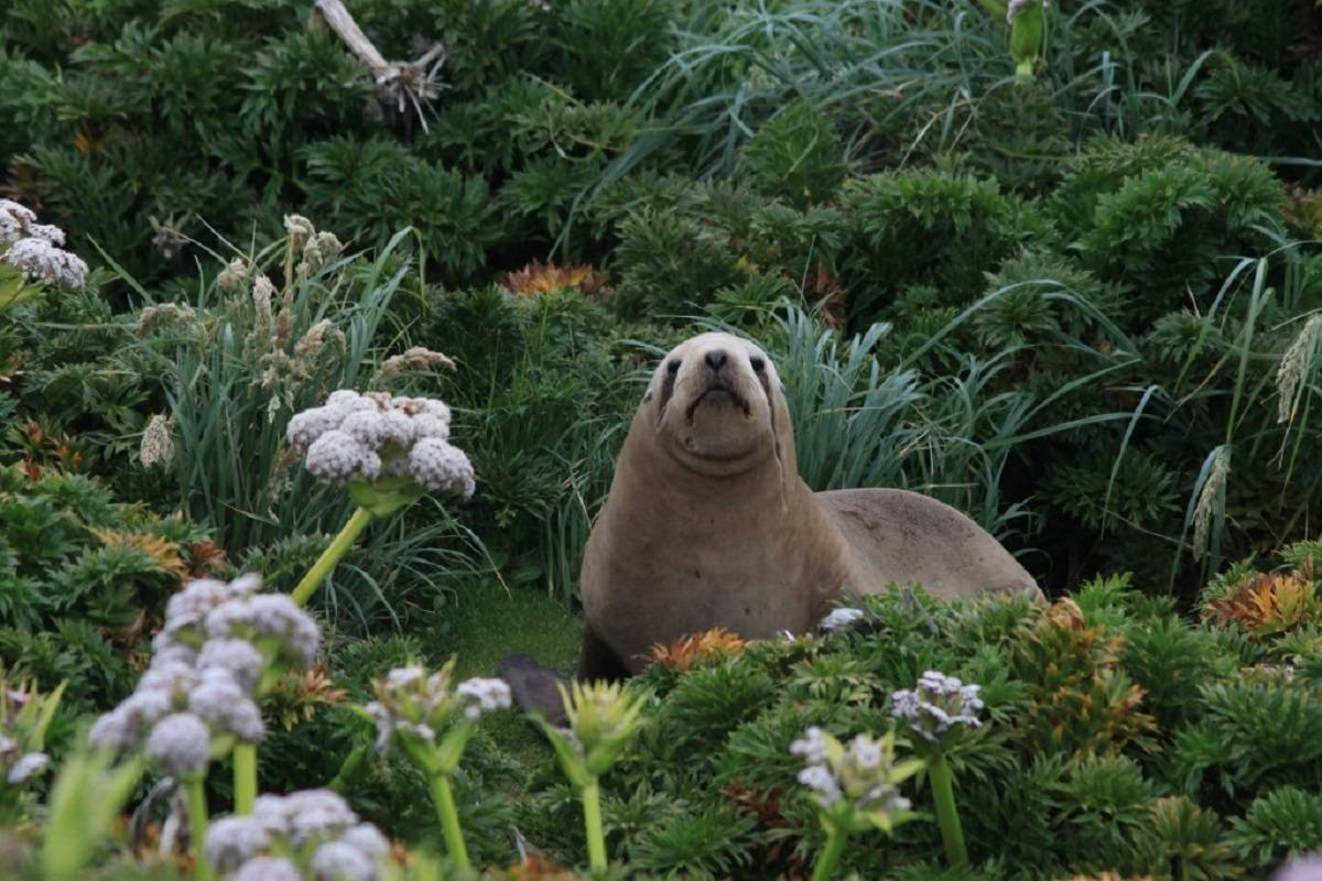 Subantarctic Islands - Forgotten Islands of the South Pacific
