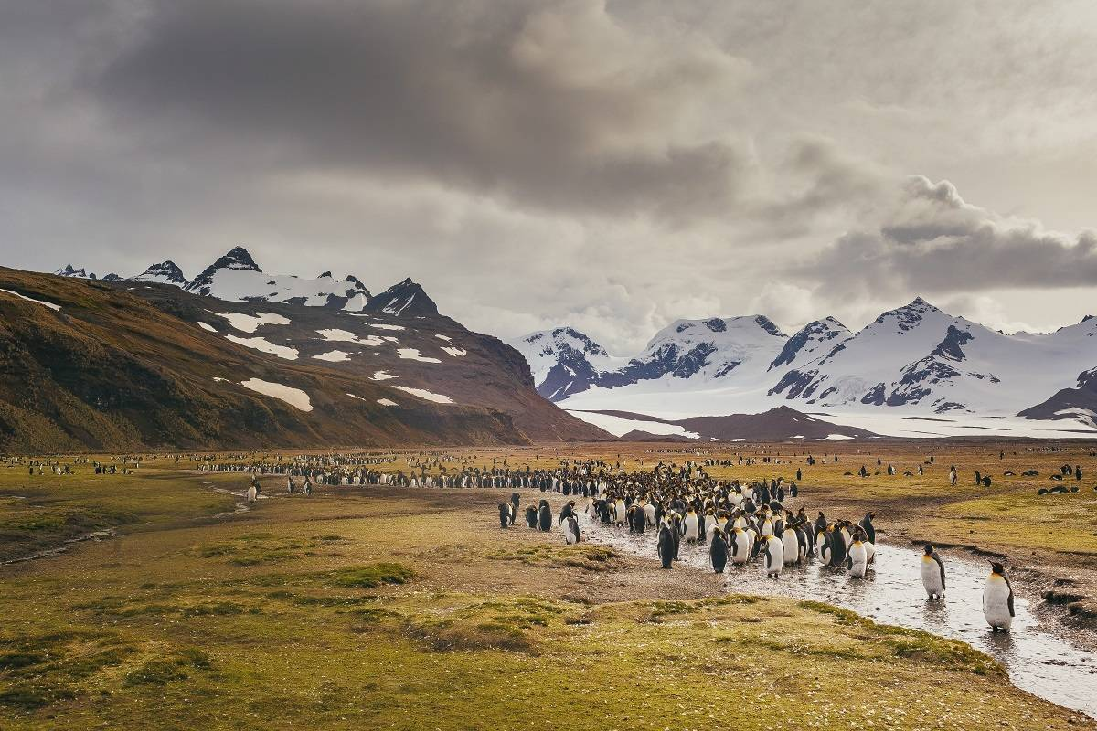 Falklands, South Georgia & Antarctica - Explorers and Kings