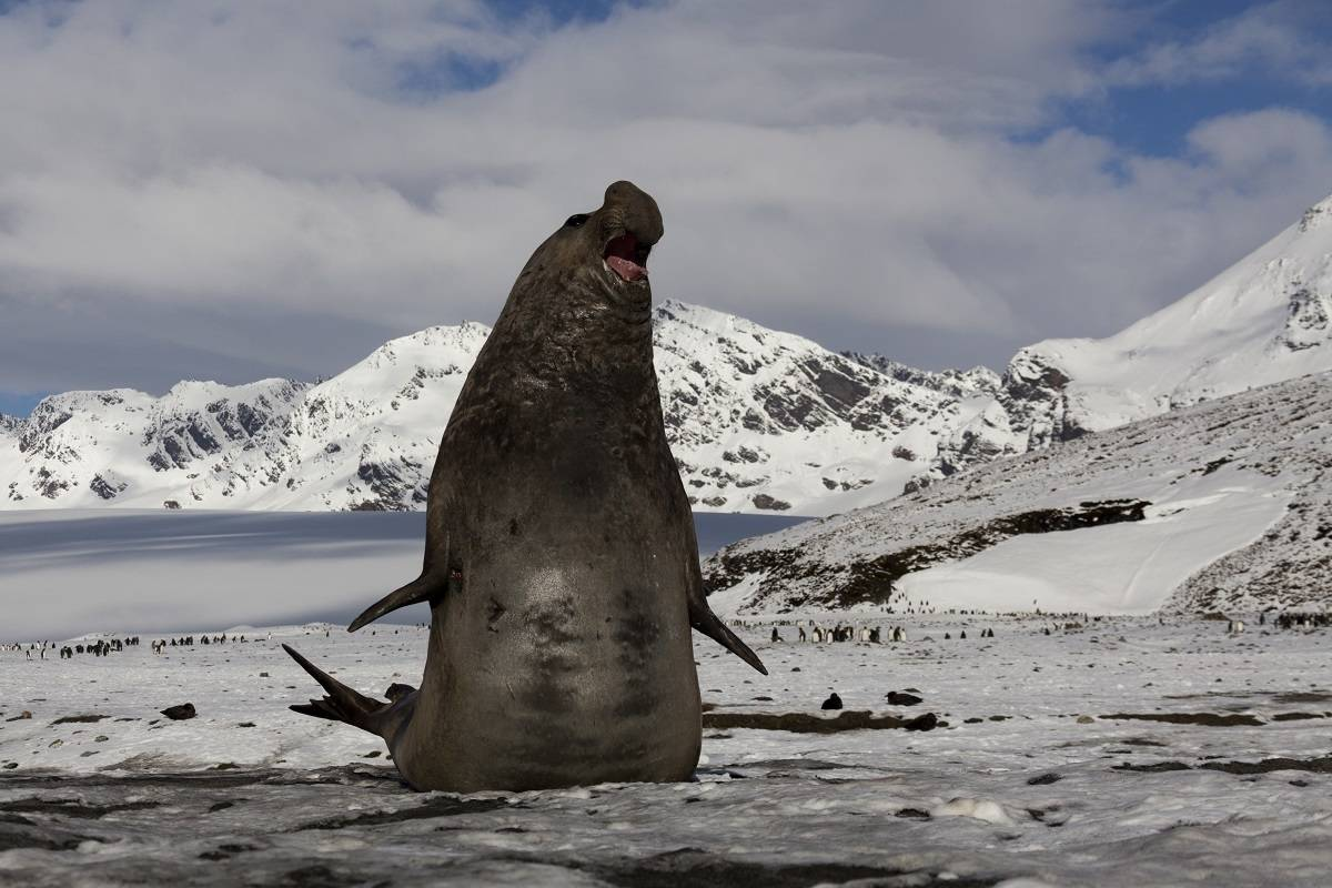 Falklands, South Georgia & Antarctica ex. Puerto Madryn