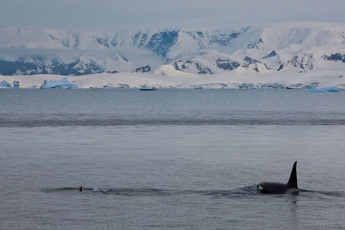 Antarctica feat Ross Sea ex Hobart